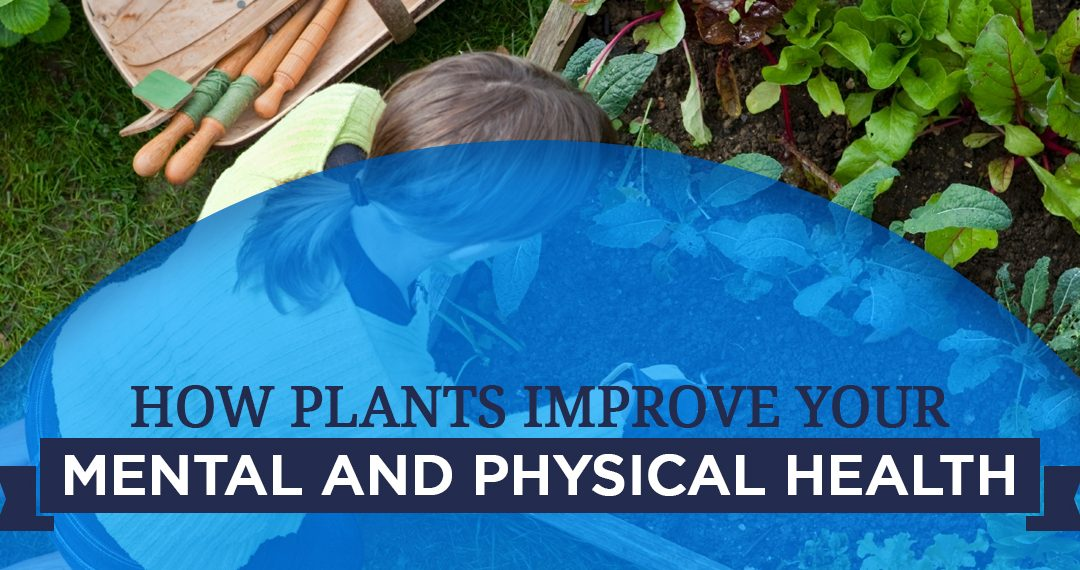 How Plants Improve Your Mental and Physical Health